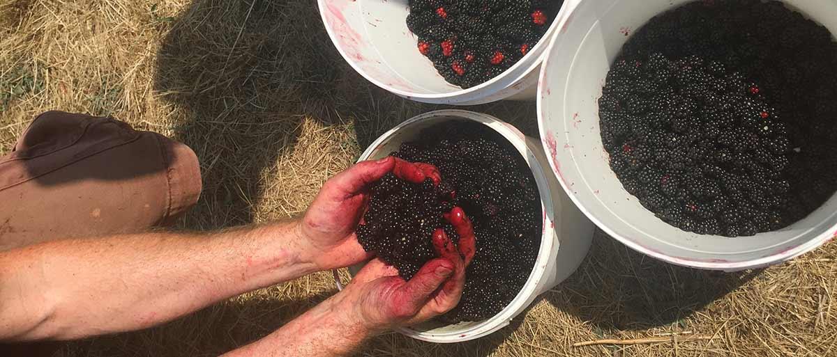 Choosing & Harvesting our Ingredients